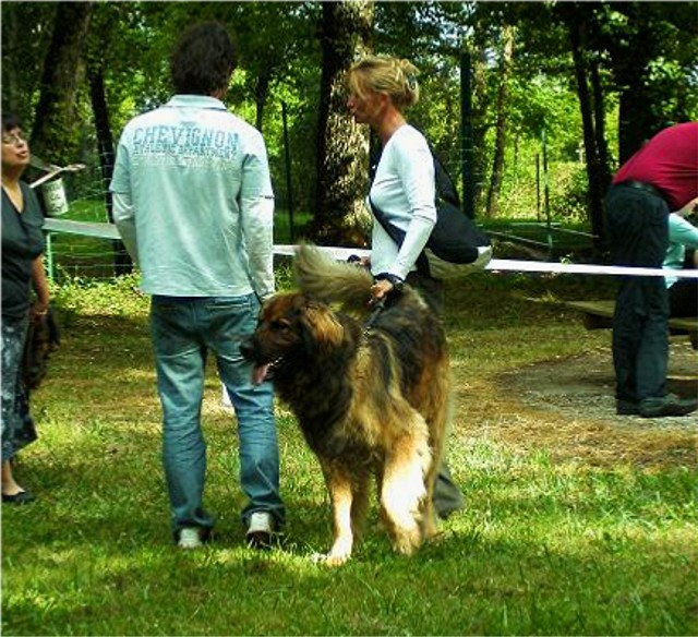 Exposition régionale d'élevage - Bannac 2008 Bannac12
