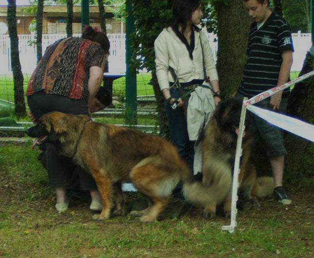 Exposition régionale d'élevage - Bannac 2008 Bannac17