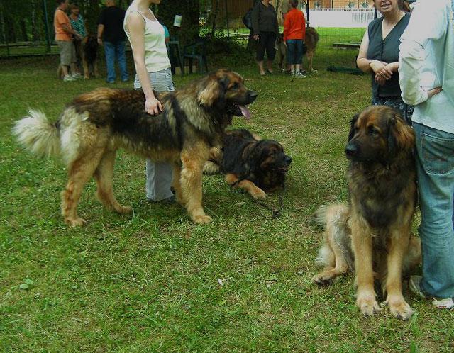 Exposition régionale d'élevage - Bannac 2008 Bannac24