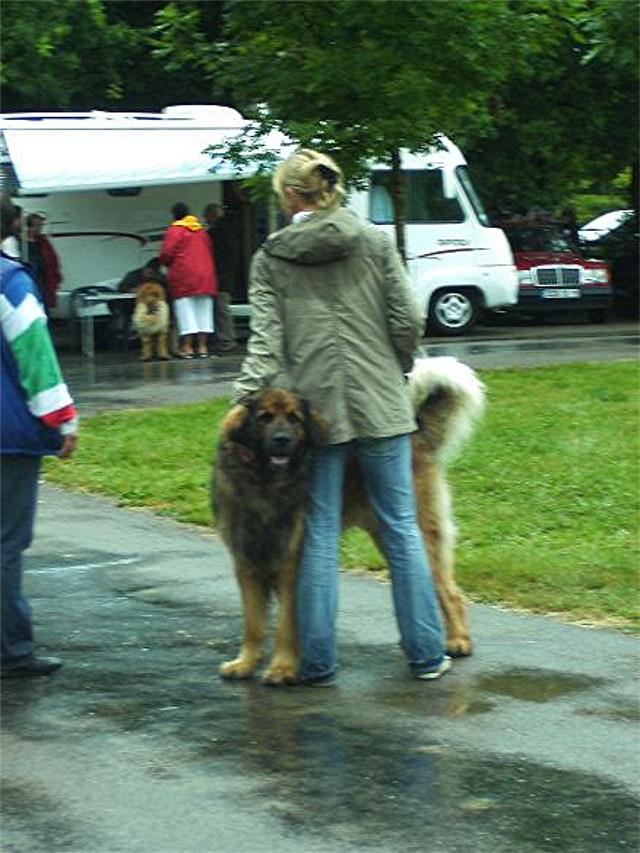 Exposition régionale d'élevage - Bannac 2008 Bannac25