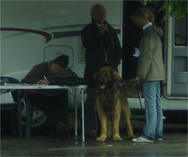 Exposition régionale d'élevage - Bannac 2008 Bannac27