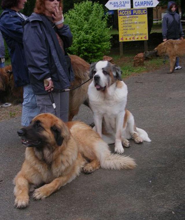 Exposition régionale d'élevage - Bannac 2008 Bannac42