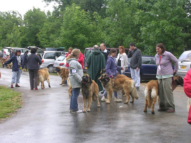 Exposition régionale d'élevage - Bannac 2008 Bannac54
