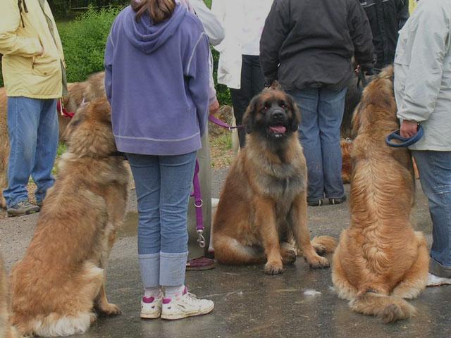 Exposition régionale d'élevage - Bannac 2008 Bannac57