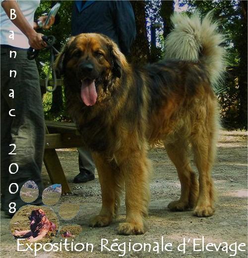 Exposition régionale d'élevage - Bannac 2008 Bannac58