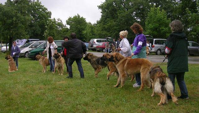 Exposition régionale d'élevage - Bannac 2008 Bannac61