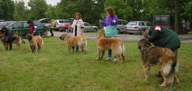 Exposition régionale d'élevage - Bannac 2008 Bannac62