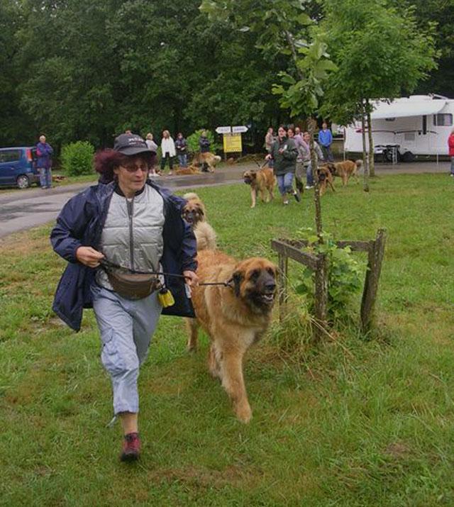 Exposition régionale d'élevage - Bannac 2008 Bannac64