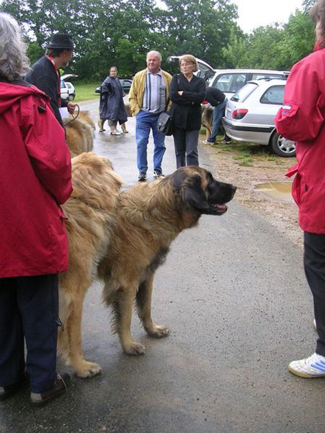 Exposition régionale d'élevage - Bannac 2008 Bannac79