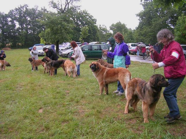 Exposition régionale d'élevage - Bannac 2008 Bannac81