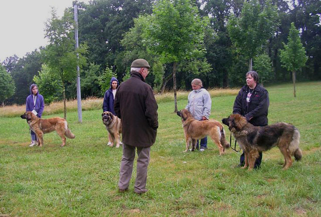 Exposition régionale d'élevage - Bannac 2008 Bannac82