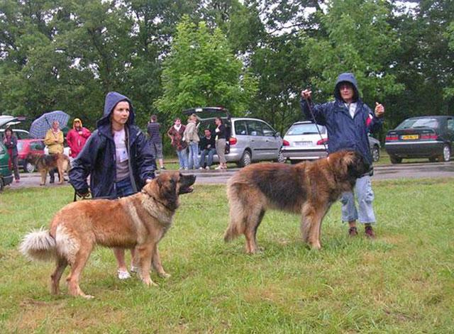 Exposition régionale d'élevage - Bannac 2008 Bannac86