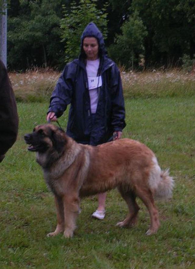 Exposition régionale d'élevage - Bannac 2008 Bannac88