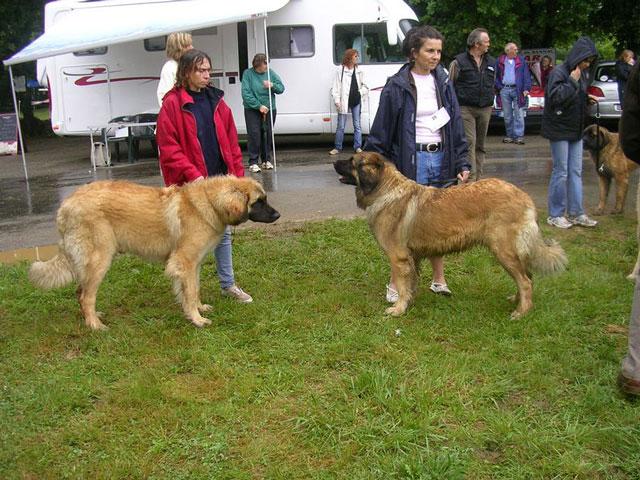 Exposition régionale d'élevage - Bannac 2008 Bannac89
