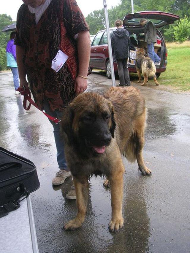 Exposition régionale d'élevage - Bannac 2008 Bannac93