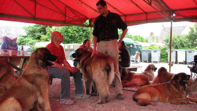 Exposition Régionale de Volckerinckhove 2008 Ensemb22