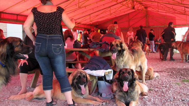 Exposition Régionale de Volckerinckhove 2008 Ensemb25