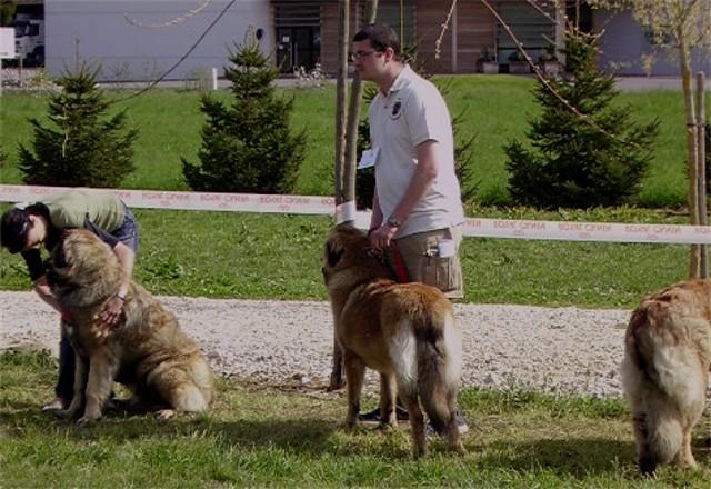 Exposition Régionale  de Vallières 2008 Gypsie13