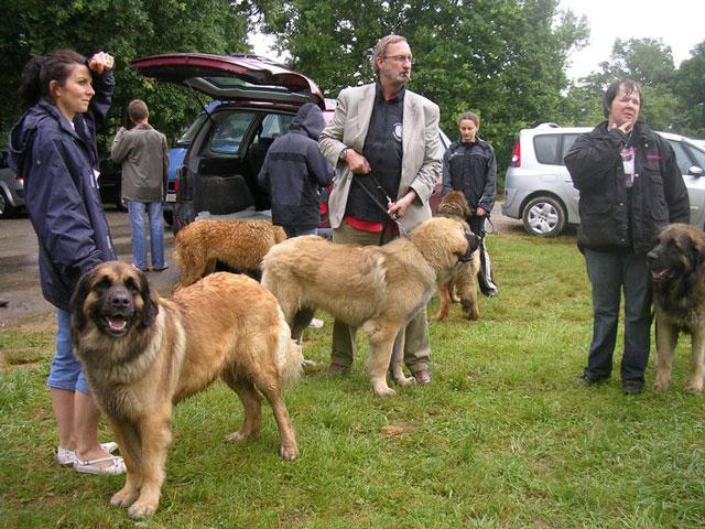 Exposition régionale d'élevage - Bannac 2008 Lot110