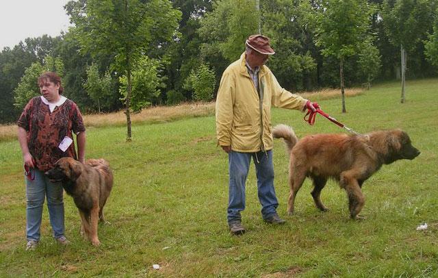 Exposition régionale d'élevage - Bannac 2008 Meille10
