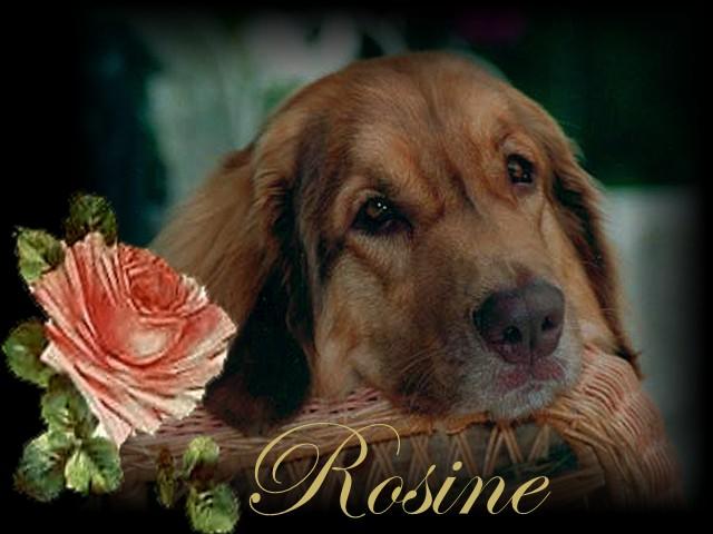 Hommage à Rosine des Neiges de Chantelouve Rosine69