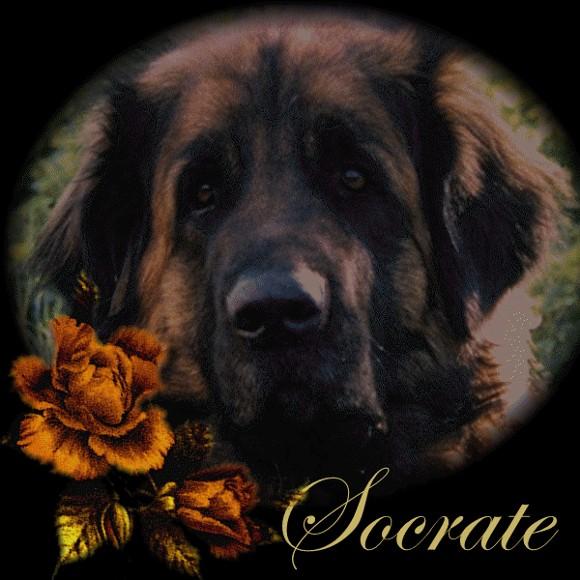 Hommage à Socrate Socrat81
