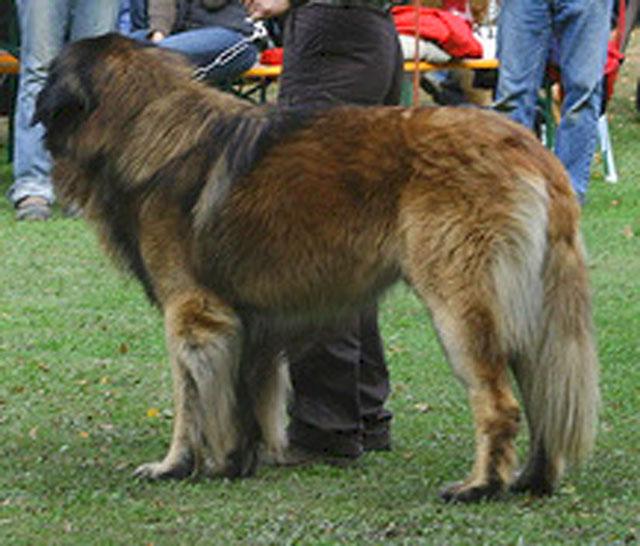 Exposition régionale d'élevage - Bannac 2008 Vouled10
