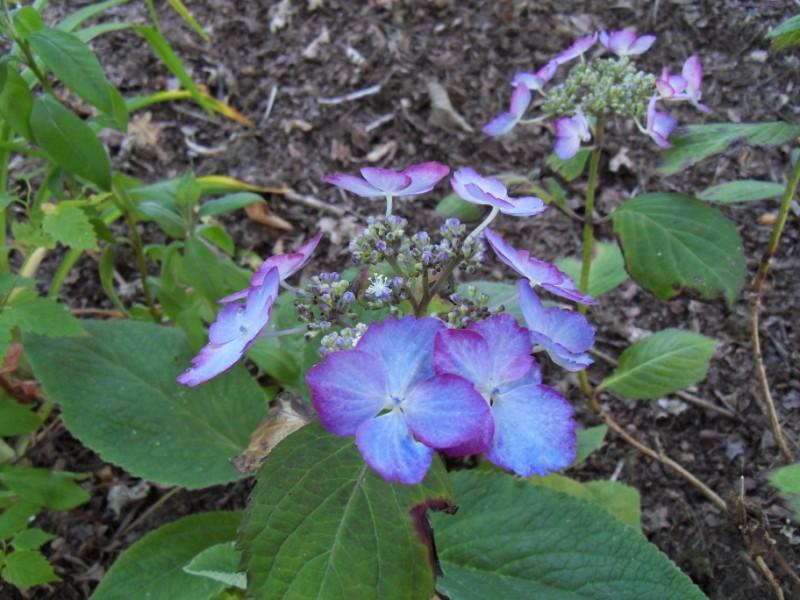 Floraisons du mois de juillet Sdc17717