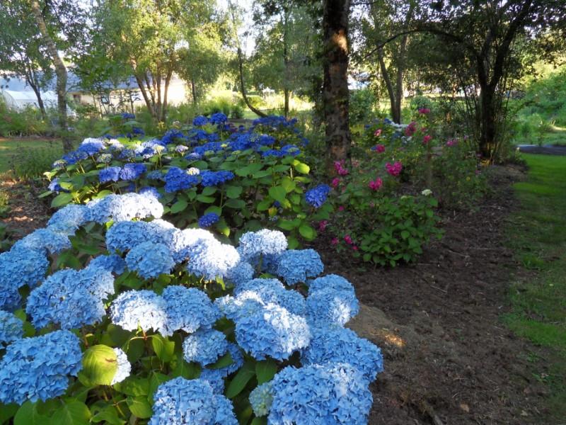 Floraisons du mois de juillet Sdc17718