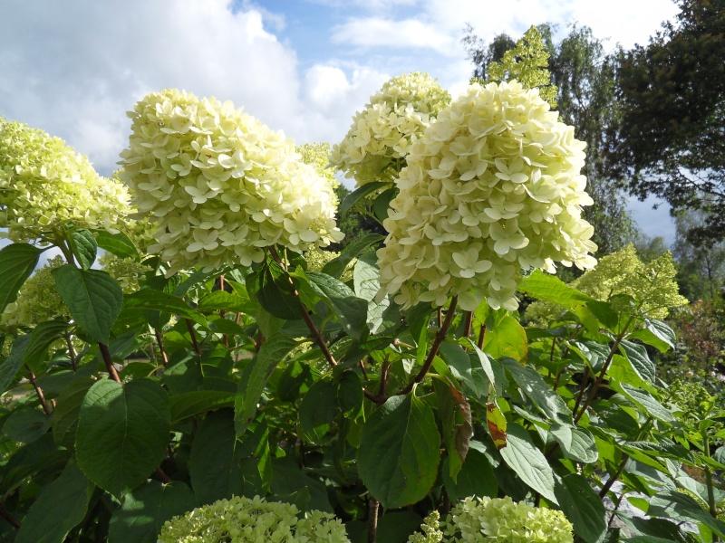 Floraisons du mois de juillet Sdc17825
