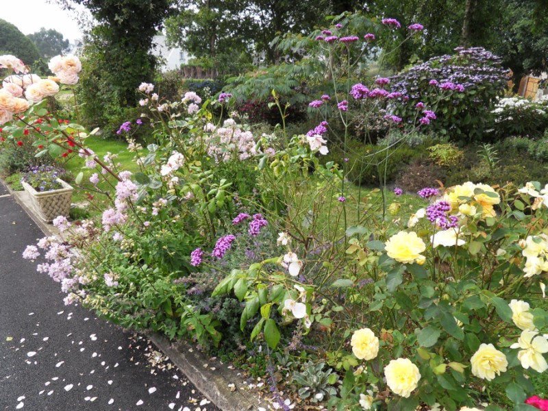 Floraisons du mois d'Août Sdc18225