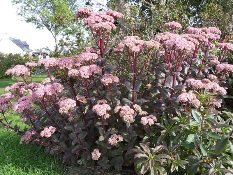 Floraisons du mois de septembre Sdc18423
