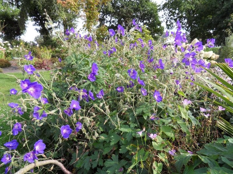 Floraisons du mois de septembre Sdc18426