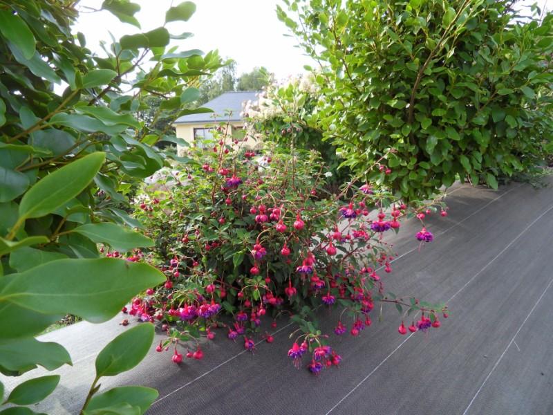 Floraisons du mois de septembre Sdc18427