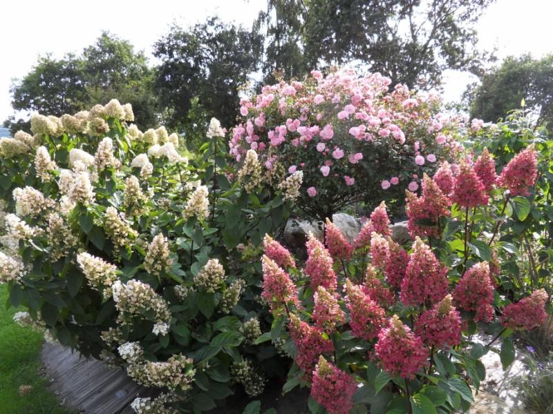 Floraisons du mois de septembre Sdc18428