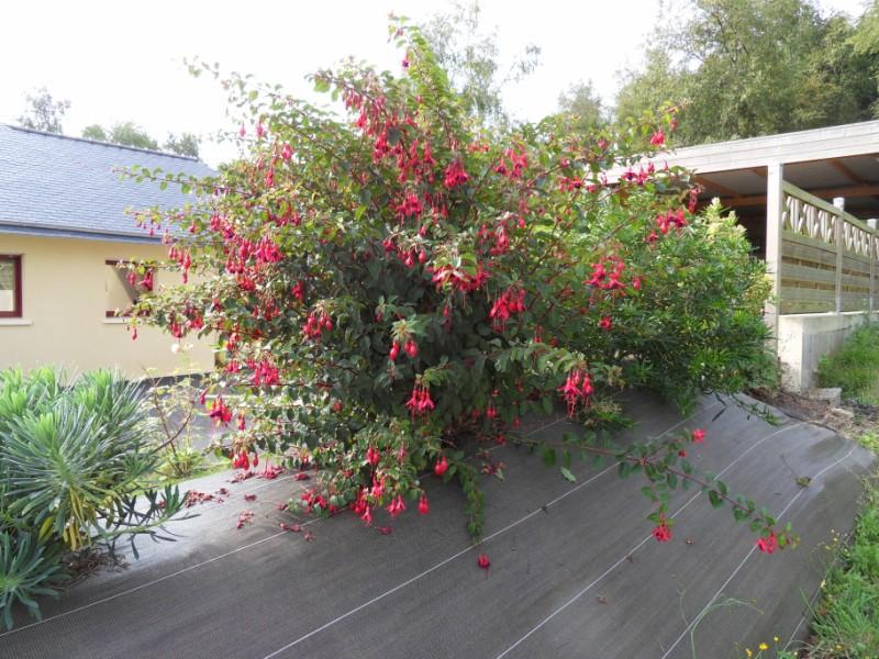 Floraisons du mois de septembre Sdc18429