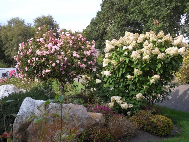 Floraisons du mois de septembre Sdc18430