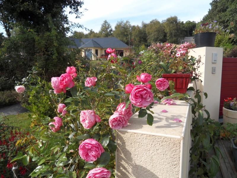 Floraisons du mois de septembre Sdc18431