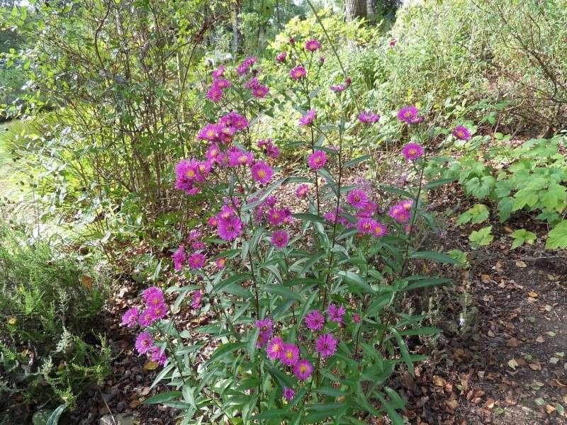 Floraisons du mois de septembre Sdc18432