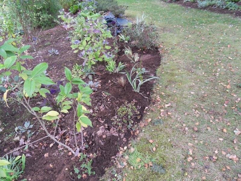 travaux au jardin - Page 5 Sdc18514