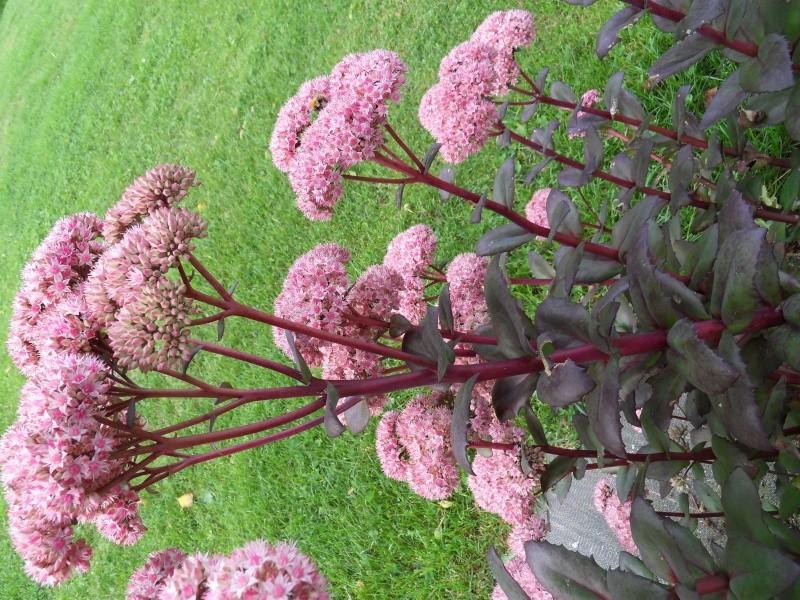 Floraisons du mois de septembre - Page 2 Sdc18518