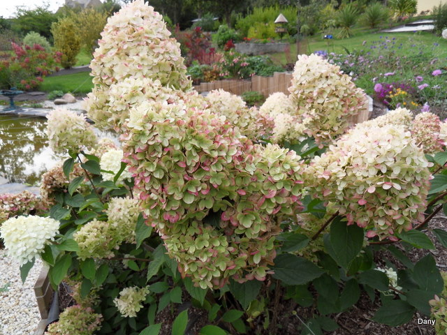 Floraisons du mois de septembre - Page 2 Sdc18519