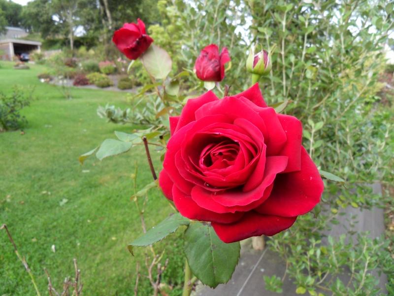 Floraisons du mois de septembre - Page 2 Sdc18520