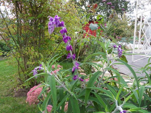 Floraisons du mois de septembre - Page 2 Sdc18522
