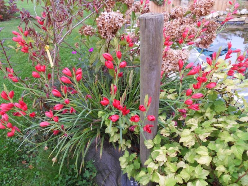 floraisons d'octobre - Page 5 Sdc18937