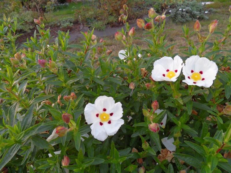 floraisons d'octobre - Page 5 Sdc18938