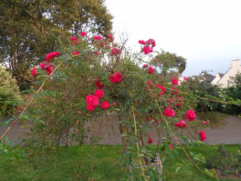 floraisons d'octobre - Page 5 Sdc18940