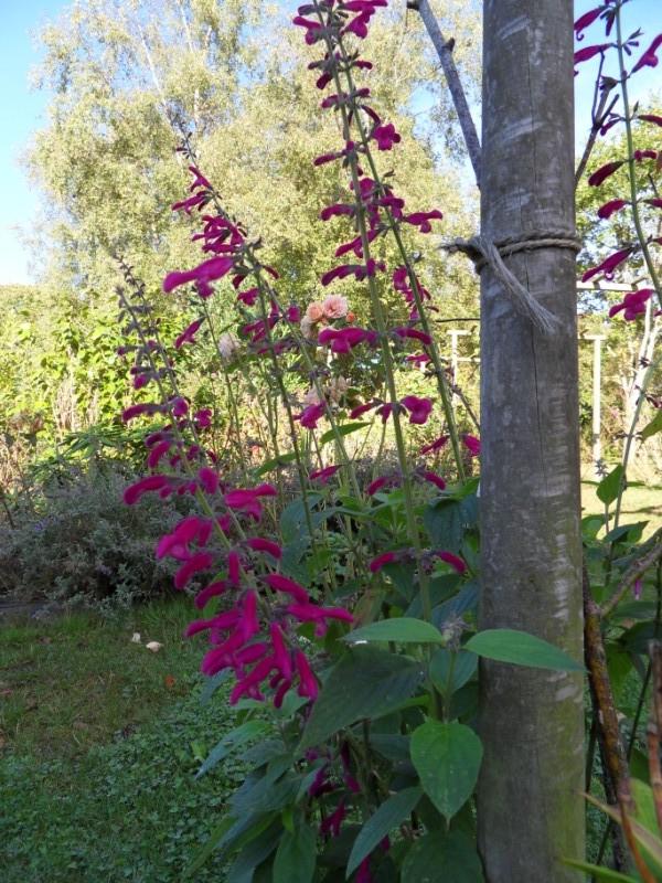 floraisons d'octobre - Page 5 Sdc18942