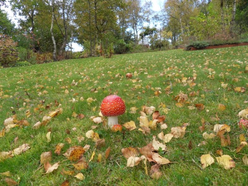 couleurs d'automne Sdc19131