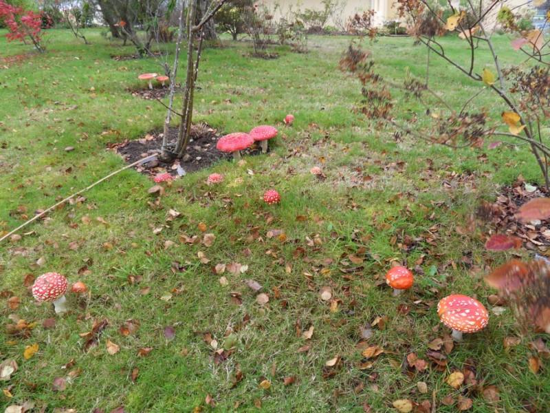couleurs d'automne Sdc19132